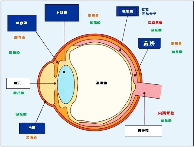 AmitA FINE 改善及預防整體眼睛健康問題
