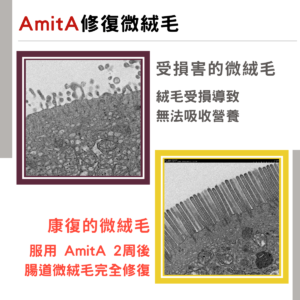 AmitA PURE 修復腸道絨毛