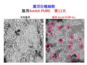 AmitA PURE 增殖巨噬細胞