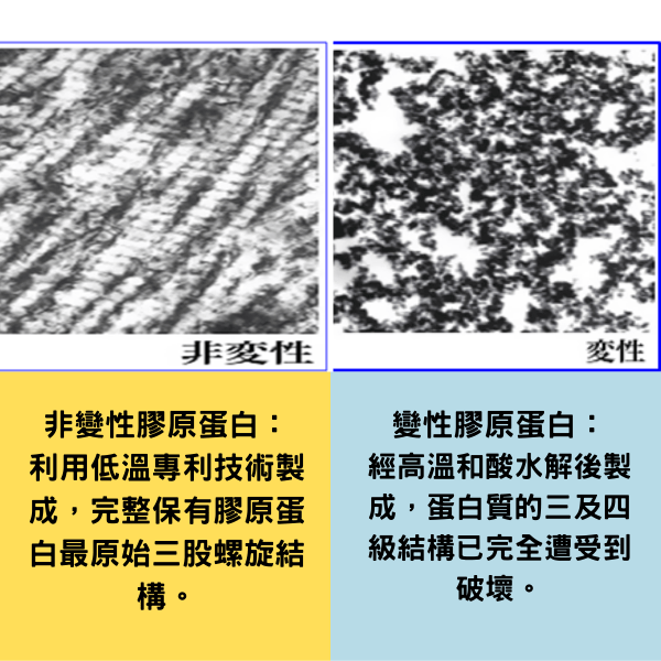 Uc2 非變性膠原蛋白